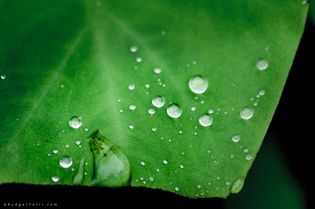 dew-on-leaf