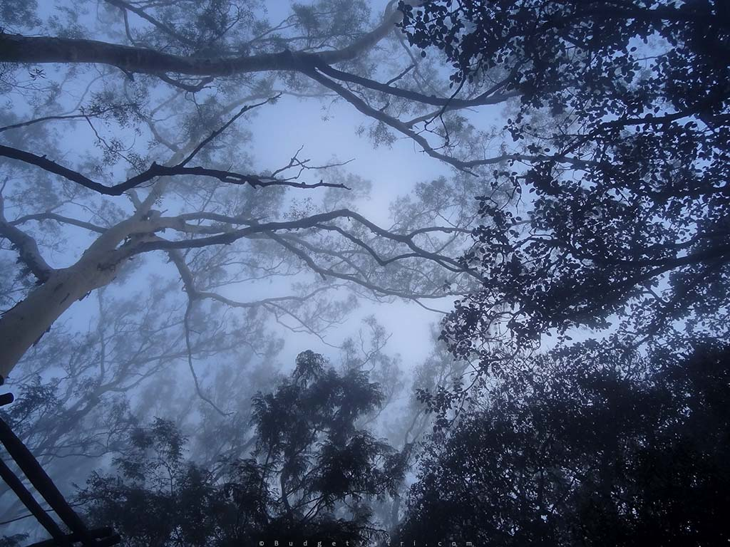 Nandi Hills Morning Foggy photo