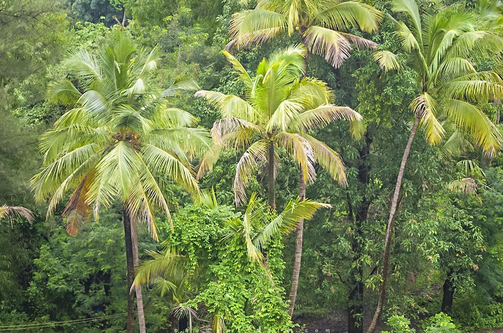 dam near Mumbai, Pelhar dam